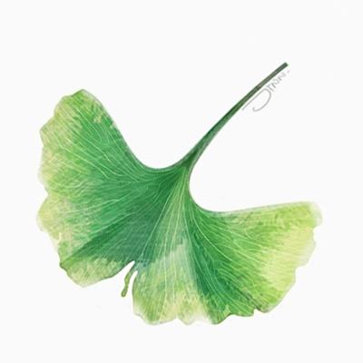 Leaf-Jinn-Ginkgo.png
